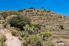 Landscape in Gheralta near Abraha Asbaha in Northern Ethiopia, Africa royalty free stock images