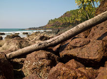 Landscape in Goa Royalty Free Stock Image