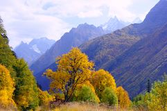 Landscape of the golden autumn in October Royalty Free Stock Photos