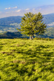 A landscape at golden hour of sunset.  Royalty Free Stock Images