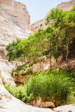 Landscape of the gorge with a stream and vegetation Stock Photos