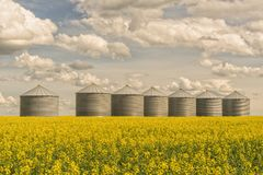 Grain Silos in Blooming Canola Stock Images
