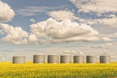 Seven Grain Silos in a Canola Field Stock Photography