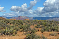 Landscape in Grand Canyon National Park, Arizona, United States Stock Image