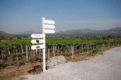 Landscape of grape farm Royalty Free Stock Photos