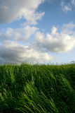 Landscape with grass and clouds. Vertical photography, with grass and clouds, vivid colors Royalty Free Stock Photo