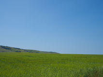 Landscape of grass field, blue sky and green environment. Stock Photo