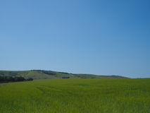 Landscape of grass field, blue sky and green environment. Stock Photography