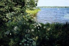 Landscape grass flowers lake blue sky sunlight day. River nature tree plants coast breeze stock image