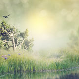 Landscape with Grass and Pond Stock Photos