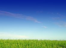 Landscape with grass and sky Stock Photography