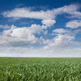 Landscape grass sky Stock Images