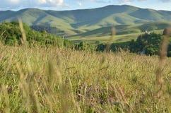 Landscape Through Grass. Landscape of Zlatibor Mountain viewed partly through spring grass Stock Photos