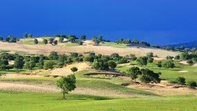 Landscape  of   grassland Royalty Free Stock Photos