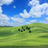 Landscape  of   grassland Royalty Free Stock Photography