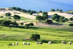 Landscape of the grassland Stock Image