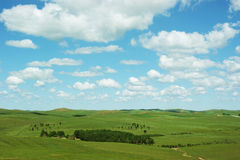 Landscape of grassland Stock Photos