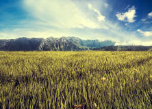 Landscape grassland field with mountain and blue sky, vintage tone Royalty Free Stock Photos