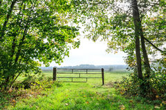 Landscape of grassland seen through the trees Stock Photography