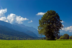 Landscape of grassland with trees and mountains. On a sunny day Stock Photo
