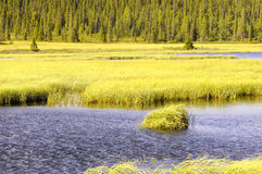 Landscape of Grasslands. Landscape of the grasslands, trees, and river running through Laponia national park in Sweden Royalty Free Stock Photography