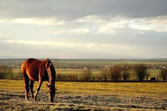 Landscape of grazing horse at sunset Stock Photo