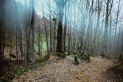 Landscape of great mystery forest Stock Photography