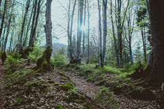 Landscape of great mystery forest. In spring in the cloudy day Stock Photos