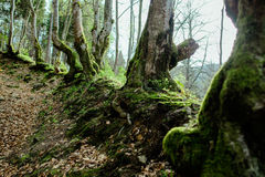 Landscape of great mystery forest. In spring in the cloudy day Stock Photography