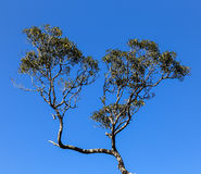The landscape in great ocean road,australia Royalty Free Stock Photo