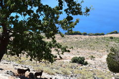 Landscape of great scenic with the goats stand in the shade Royalty Free Stock Photos