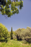 Landscape in Greece with cypress. Landscape with cypress and other trees with a wildflower meadow on sunny spring's day in Rhodes island, Greece stock photos