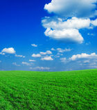 Landscape green. Landscape - green filed, the blue sky and white clouds Royalty Free Stock Images
