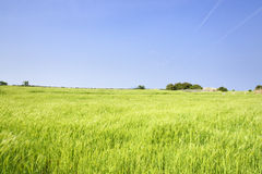 Landscape of green barley field and horizon Stock Photography
