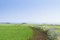 Landscape of green barley field and horizon Stock Photos