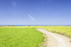 Landscape of green barley field and horizon Royalty Free Stock Images