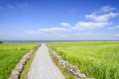 Landscape of green barley field and horizon Royalty Free Stock Photos