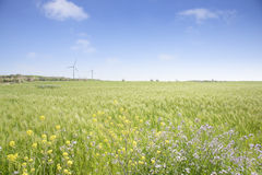 Landscape of green barley field Stock Photo