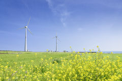 Landscape of green barley field and yellow canola flowers Royalty Free Stock Image