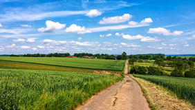 Landscape with green cereal fields. Hessian summer landscape with green cereal fields, Germany Stock Images