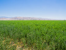 Landscape of green field in California, USA Royalty Free Stock Photo
