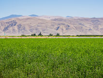 Landscape of green field in California. USA Stock Photos
