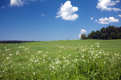 Landscape with green field, forest on horizon and clouds on blue sky Stock Photos