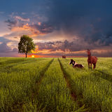 Landscape with a green field, road and horses Stock Photography