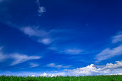 Landscape - green fields, the blue sky Royalty Free Stock Photography