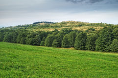 Landscape with green fields and hills lined with leafy trees Stock Image