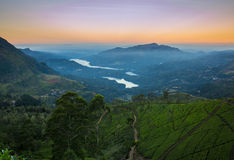 Landscape with green fields of tea Royalty Free Stock Photo