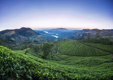 Landscape with green fields of tea Stock Photography