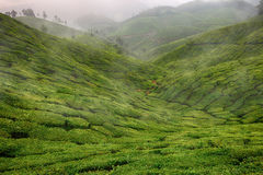 Landscape with green fields of tea in Sri Lanka. Mountains Royalty Free Stock Photos