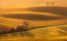 Landscape with green fields, trees, and flowers at colorful sunset Royalty Free Stock Images